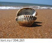 Купить «Ракушка в песке», фото № 394261, снято 30 июля 2008 г. (c) Маргарита Лир / Фотобанк Лори