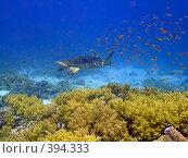 Купить «Морская черепаха», фото № 394333, снято 10 марта 2007 г. (c) Ольга Хорошунова / Фотобанк Лори