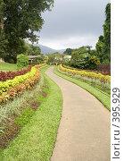 Купить «Ботанический сад», фото № 395929, снято 22 января 2019 г. (c) SummeRain / Фотобанк Лори