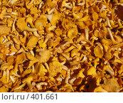 Купить «Грибы, лисички», фото № 401661, снято 12 августа 2008 г. (c) Юлия Селезнева / Фотобанк Лори