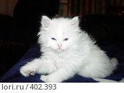 Купить «Белый пушистый котенок», фото № 402393, снято 19 ноября 2006 г. (c) Ирина / Фотобанк Лори