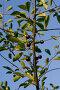 Ветка вишни, фото № 402721, снято 28 марта 2017 г. (c) Лошкарев Антон / Фотобанк Лори