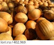Купить «Лесные орехи», фото № 402969, снято 13 августа 2008 г. (c) Вера Беляева / Фотобанк Лори