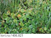 Купить «Листья кувшинок», фото № 406821, снято 16 августа 2008 г. (c) Роман Захаров / Фотобанк Лори