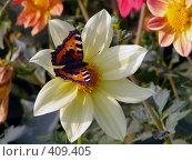 Купить «Бабочка на цветке», фото № 409405, снято 17 августа 2008 г. (c) Ольга Романенко / Фотобанк Лори