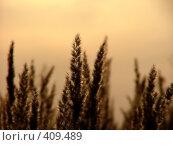 Купить «На закате», фото № 409489, снято 2 сентября 2004 г. (c) Забалуев Игорь Анатолич / Фотобанк Лори