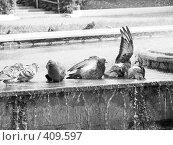 Купить «Голуби купаются в фонтане», фото № 409597, снято 16 августа 2008 г. (c) Евгений Одеров / Фотобанк Лори