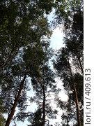 Лес на фоне неба. Стоковое фото, фотограф Svetlana V Bojan / Фотобанк Лори