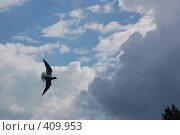 Купить «Чайка в небе», фото № 409953, снято 29 июня 2008 г. (c) Алексей Желтов / Фотобанк Лори
