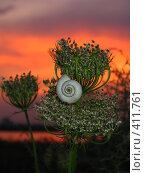 Купить «Улитка на растении на фоне солнечного заката Snail on sundown», фото № 411761, снято 10 августа 2004 г. (c) A Челмодеев / Фотобанк Лори
