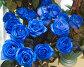 Букет голубых роз, фото № 413049, снято 16 августа 2008 г. (c) Михаил Мандрыгин / Фотобанк Лори