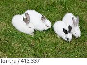 Купить «Кролики», фото № 413337, снято 7 августа 2008 г. (c) Михаил Ворожцов / Фотобанк Лори