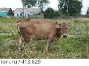 Купить «Корова», фото № 413629, снято 30 июля 2008 г. (c) Голофеева Галина / Фотобанк Лори