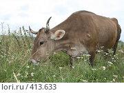 Купить «Корова», фото № 413633, снято 30 июля 2008 г. (c) Голофеева Галина / Фотобанк Лори