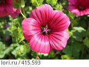 Цветок. Стоковое фото, фотограф Андрей Русаков / Фотобанк Лори