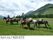 Купить «Вьючные лошади в поле», эксклюзивное фото № 420673, снято 28 июля 2008 г. (c) Оксана Гильман / Фотобанк Лори