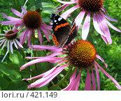 Купить «Бабочка и цветы», фото № 421149, снято 16 августа 2008 г. (c) Андрей / Фотобанк Лори