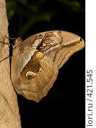 Купить «Бабочка», фото № 421545, снято 23 августа 2008 г. (c) Tyurina Ekaterina / Фотобанк Лори