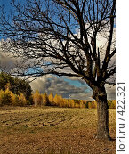 Купить «Одинокий дуб», фото № 422321, снято 5 октября 2005 г. (c) Павел Преснов / Фотобанк Лори