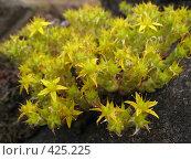 Купить «Камни, трава, цветы на Валааме», фото № 425225, снято 6 августа 2008 г. (c) Морковкин Терентий / Фотобанк Лори
