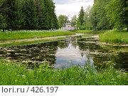 Купить «Пейзаж с заросшим прудом», фото № 426197, снято 14 июня 2008 г. (c) Дмитрий Яковлев / Фотобанк Лори