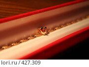 Ювелирное украшение. Стоковое фото, фотограф Ehduard Khabirov / Фотобанк Лори