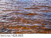 Купить «Озеро. Блики солнца на волнах.», фото № 428865, снято 23 августа 2008 г. (c) Катыкин Сергей / Фотобанк Лори