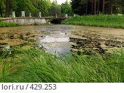 Купить «Пейзаж с заросшим прудом», фото № 429253, снято 14 июня 2008 г. (c) Дмитрий Яковлев / Фотобанк Лори