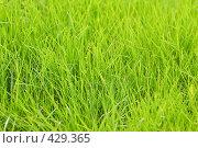 Купить «Зеленая трава, фон», фото № 429365, снято 22 августа 2008 г. (c) Михаил Павлов / Фотобанк Лори