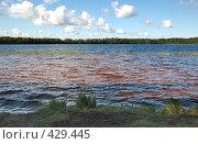 Купить «Озеро», фото № 429445, снято 23 августа 2008 г. (c) Катыкин Сергей / Фотобанк Лори