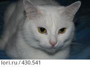 Купить «Кошка», фото № 430541, снято 21 июля 2007 г. (c) Сергей Авдеев / Фотобанк Лори