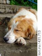 Купить «Собака спит- служба идет !», фото № 431713, снято 22 июня 2008 г. (c) Александр Тараканов / Фотобанк Лори