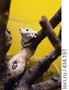 Купить «Лягушка на дереве», фото № 434197, снято 9 июня 2008 г. (c) Parmenov Pavel / Фотобанк Лори