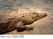 Купить «Крокодил», фото № 434205, снято 9 июня 2008 г. (c) Parmenov Pavel / Фотобанк Лори