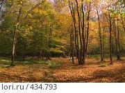 В лесу Тебердинского заповедника. Стоковое фото, фотограф Алексей Бок / Фотобанк Лори