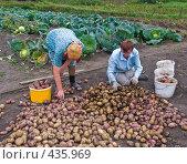 Купить «Сортировка картофеля. Русские национальные забавы», эксклюзивное фото № 435969, снято 31 августа 2008 г. (c) Ирина Солошенко / Фотобанк Лори