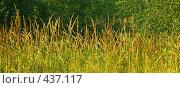 Купить «Трава», фото № 437117, снято 14 августа 2008 г. (c) Анатолий Теребенин / Фотобанк Лори