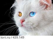 Купить «Портрет белого разноглазого кота», фото № 439149, снято 3 сентября 2008 г. (c) Андрей Армягов / Фотобанк Лори