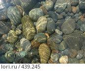 Купить «Морские камни близ Кара-Дага», фото № 439245, снято 22 августа 2008 г. (c) Ольга Завгородняя / Фотобанк Лори