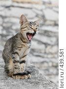 Купить «Маленькая злая кошечка», фото № 439581, снято 28 августа 2008 г. (c) OSHI / Фотобанк Лори