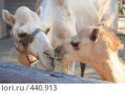 Купить «Парк верблюдов», фото № 440913, снято 10 августа 2008 г. (c) Марина / Фотобанк Лори