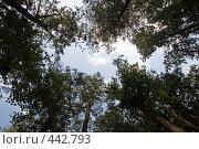 Купить «Взгляд вверх», фото № 442793, снято 3 сентября 2008 г. (c) Сергей Лаврентьев / Фотобанк Лори
