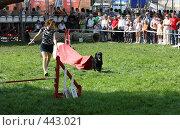 Купить «Соревнования собак», фото № 443021, снято 16 августа 2008 г. (c) Виктор Аксёнов / Фотобанк Лори