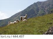 Купить «Горные козлы», фото № 444497, снято 4 августа 2008 г. (c) Антон Щербина / Фотобанк Лори