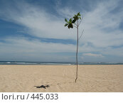 Купить «Одинокое деревце», фото № 445033, снято 17 февраля 2007 г. (c) Артём Дудкин / Фотобанк Лори