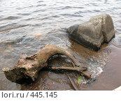 Купить «Пень и валун в воде. Валаам.», фото № 445145, снято 6 августа 2008 г. (c) Заноза-Ру / Фотобанк Лори