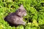 Путешествие котенка по петрушке, фото № 445845, снято 15 августа 2008 г. (c) Дмитрий Ощепков / Фотобанк Лори