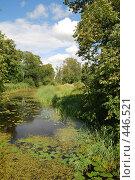 Купить «Летний день», фото № 446521, снято 17 июля 2008 г. (c) Мария Левочкина / Фотобанк Лори
