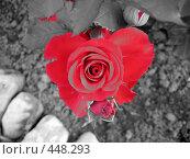Купить «Роза в форме сердца», фото № 448293, снято 23 августа 2008 г. (c) Андрей / Фотобанк Лори