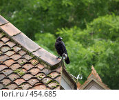 Купить «Ворона на крыше», фото № 454685, снято 21 августа 2008 г. (c) Юлия Бобровских / Фотобанк Лори